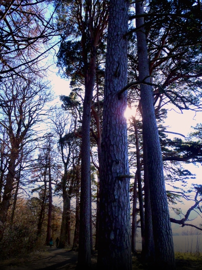 Trees by the side of Derwent Water